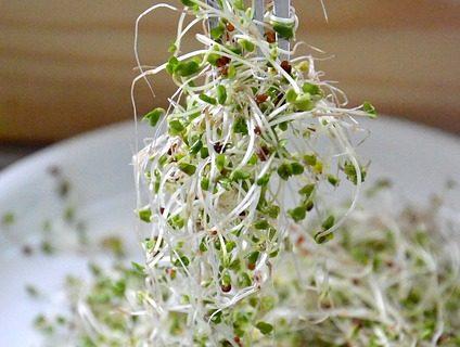 Brokkolisprossen – Nährwerte, Einnahme und Anwendung