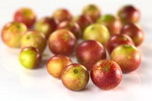 Früchte des Camu Camu