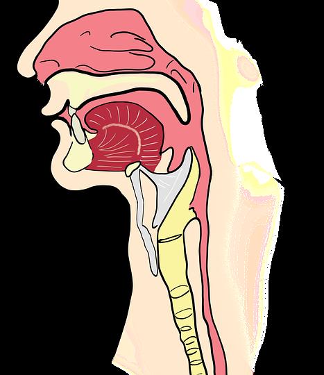 Kehlkopfentzündung – Symptome und Hausmittel gegen Problem