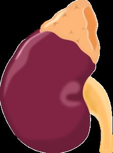 Nierenbeckenentzündung – natürliche Hausmittel, die wirklich helfen