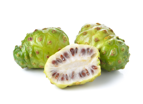 Noni Frucht von Morinda citrifolia