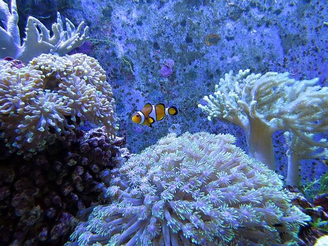 Sango Meereskoralle – Wirkung, Handelsformen und Anwendungsgebiete